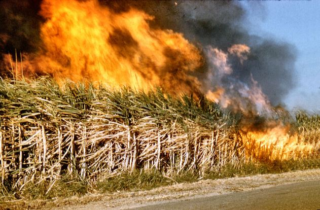 sugarcane burning
